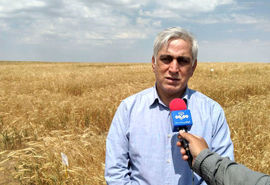 رشد ۲۳درصدی تولید محصولات زراعی در 5 سال اخیر