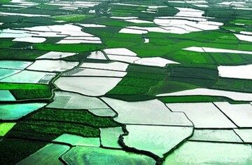 راهاندازی سامانه یکپارچهسازی اطلاعات کشاورزی در خوزستان