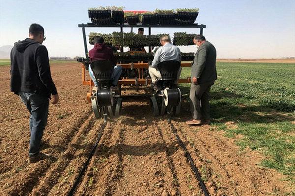 تولید ۲۶۰ هزار نشای گلدانی کلزا در کردستان