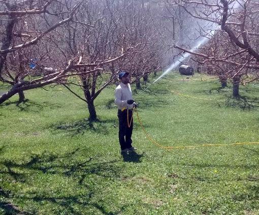 مبارزه پیش بهاره باغات شهرستان هشترود در سطح 2500هکتار