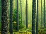 پیشبینی احیا و توسعه 70 هزار هکتار از اراضی جنگلی تا پایان سال99