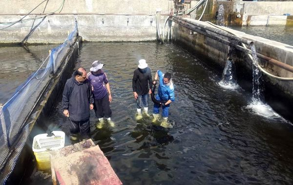 تولید 21 تن ماهی خاویاری در استان قزوین