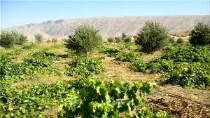 آغاز عملیات اجرایی فاز نخست طرح توسعه باغات دیم در روستای سرتشنیز