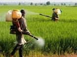 مبارزه با سن مادر غلات در ۶۰۰ هزار هکتار از مزارع