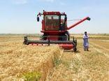برداشت مکانیزه گندم از سطح ۴۶ هزار هکتار زمینهای کشاورزی سیستان