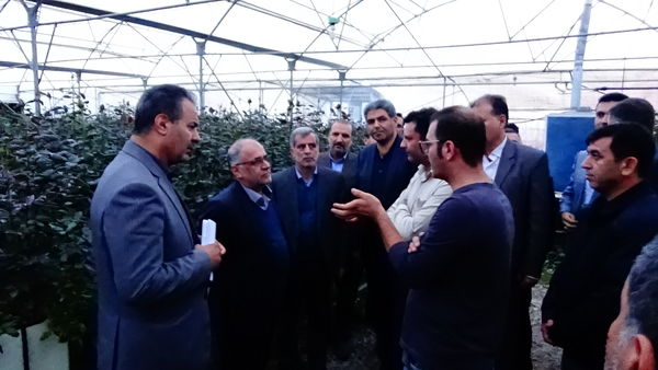 بازدید استاندار و رئیس جهادکشاورزی استان زنجان از شهرک گلخانهای پردیس