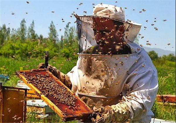 631تن شکر در زنبورستان های استان تهران توزیع شد