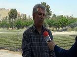 توسعه کشت گیاهان دارویی در اراضی ملی کردستان