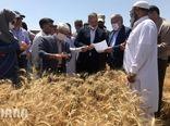 دومین روز سفر وزیر جهاد کشاورزی به استان سیستان و بلوچستان