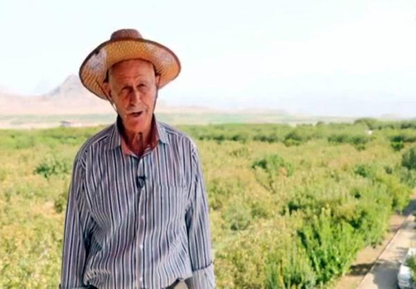 باغدار اهل هادیشهر در آذربایجان شرقی رکورد تولید پسته را در کشور شکست