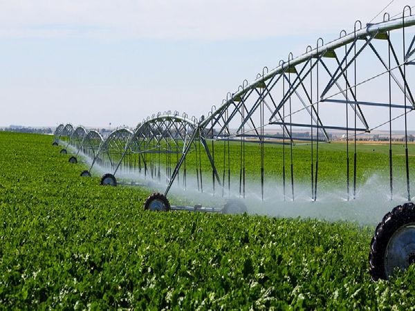 اجرای سامانه نوین آبیاری در بیش از ۴۵ درصد اراضی کشاورزی استان بوشهر