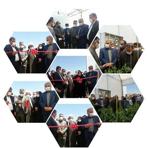 افتتاح  گلخانه گوجه فرنگی در بیضا