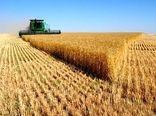 اسلامشهر، رتبه نخست استان تهران در افزایش محصولات زراعی را کسب کرد