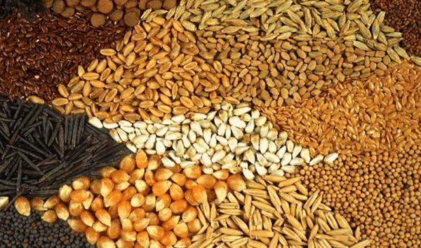 فعالیت کارخانههای خوراک دام با ظرفیت پایین در خراسان شمالی