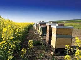 تولید 200 تن عسل در مرودشت