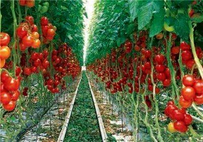 راهاندازی دو شهرک گلخانهای در بیله سوار