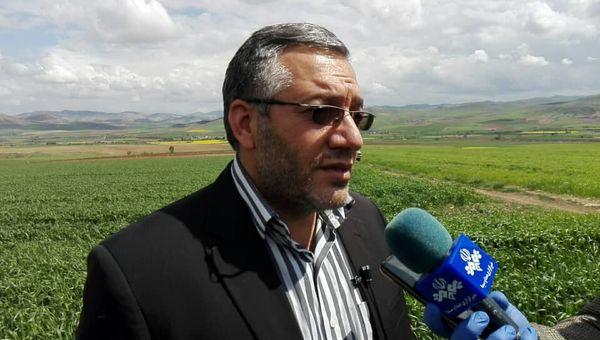 پیش بینی تولید ۷۳۰ هزار تن گندم از مزارع آذربایجان غربی