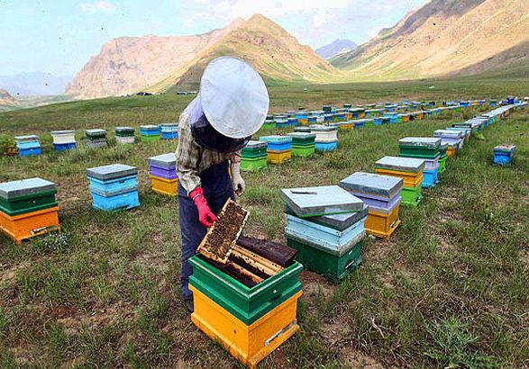کارگاه آموزشی تخصصی زنبورداری در استان بوشهر برگزار میشود