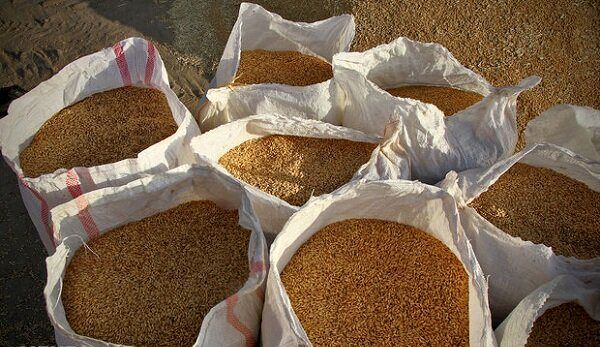 خرید گندم در استان اصفهان از مرز ۱۲۱ هزار تن گذشت