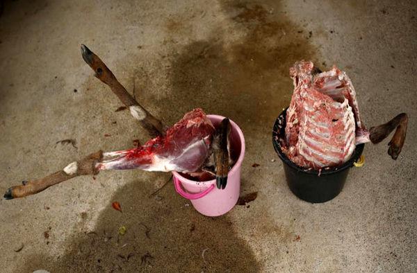 دستگیری یک  متخلف به جرم شکار آهوی وحشی
