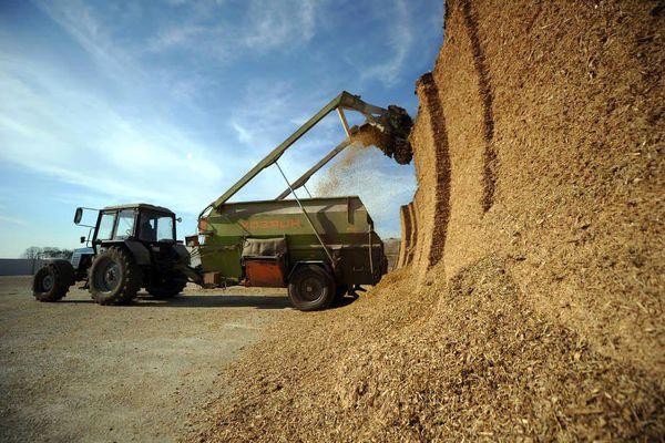 7000 هکتار از اراضی شهرستان آرادان به کشت غلات اختصاص دارد