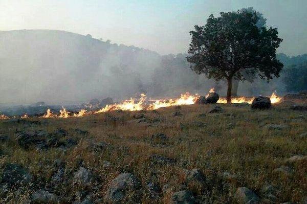 از روشن کردن آتش در طبیعت خودداری کنید