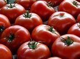 آغاز توزیع گوجه فرنگی جنوب در میادین