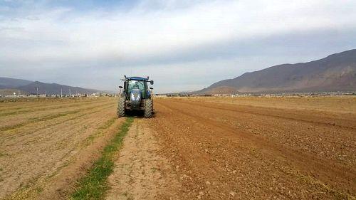 کاشت مستقیم جو در ارسنجان