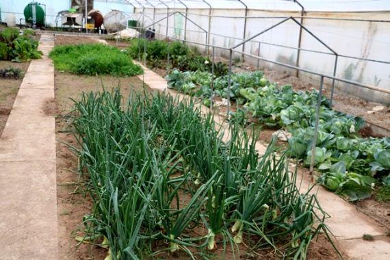 وجود بیش از 27هزار متر مربع  گلخانه در شهرستان شهربابک