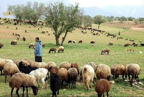 سالانه ۲۰۰ هزار راس دام عشایر خراسان شمالی از استان خارج میشود