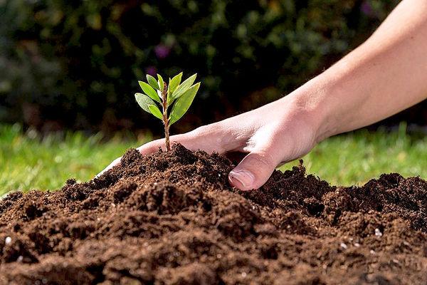 """تدوین آییننامه اجرایی """"قانون حفاظت از خاک"""" در مراحل نهایی است"""