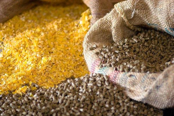 واگذاری ماموریت نظارت بر واردات تا توزیع نهادههای دامی به وزارت جهاد کشاورزی