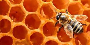 13 هزار تن عسل در آذربایجان شرقی تولید شد