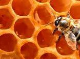 توسعه صنعت زنبور عسل نقش تآثیرگذاری در اشتغالزایی دارد