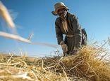 بارندگی و تقویت بهموقع به داد مزارع کردستان رسید