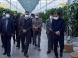 مجتمع گلخانه ای جلفا جزو 10 گلخانه بزرگ هیدروپونیک شیشه ای دنیا