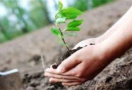 200 برنامه در هفته منابع طبیعی در استان سمنان اجرا میشود
