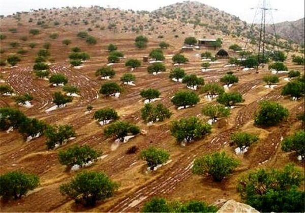 اجرای عملیات اصلاح، نوسازی و توسعه باغات در سطح بیش از ۲۲ هزار هکتار در خراسان شمالی