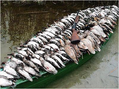 عدم گزارش تلفات گسترده در پرندگان وحشی/ 20 روز دیگر شرایط بهبود مییابد