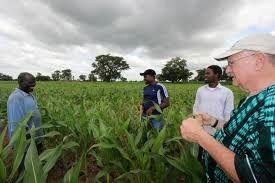 آلمان 230هزار کشاورز خرده پا را در نیجریه و سایر کشورهای آفریقایی آموزش می دهد