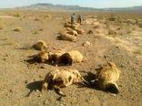 دامداران خراسان شمالی ۲۷۹ میلیون ریال بابت حمله وحوش غرامت گرفتند