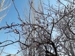 خسارت سرمازدگی با باغات و مزارع لردگان