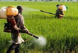 نظارت و رصد دقیق بازار سموم کشاورزی