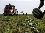 ممنوعیت واردات محصولات جالیزی به عراق لغو شد