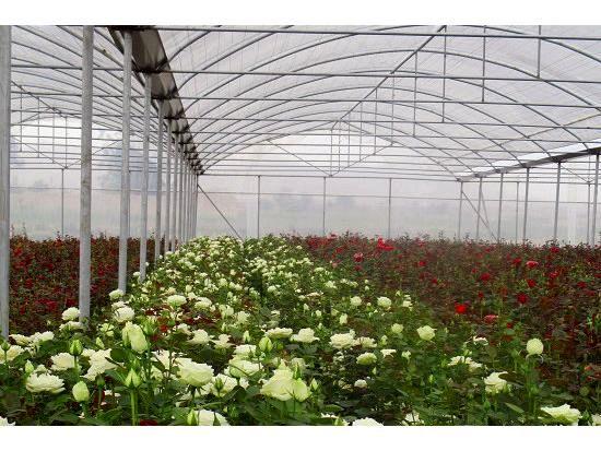 12 گلخانه کوچک مقیاس در سوادکوه احداث شد