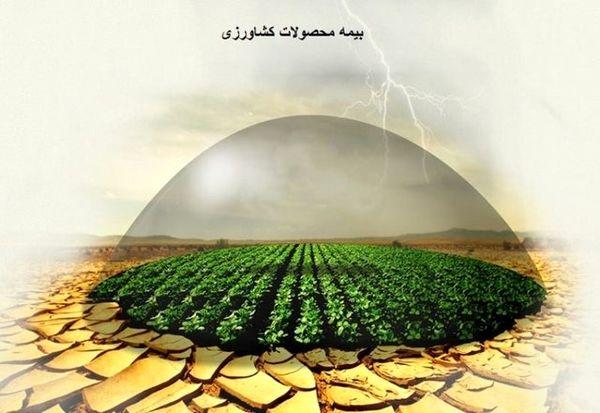 کاهش روند بیمهگری محصولات  کشاورزی در آذربایجانغربی