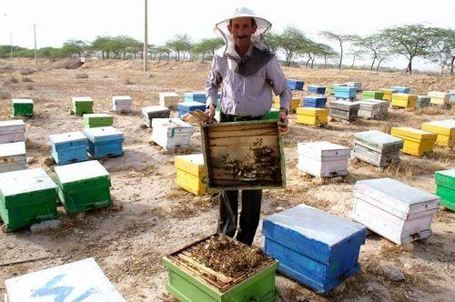 سرشماری زنبورستان ها امسال با همکاری تشکل ها و به صورت غیرحضوری انجام می شود