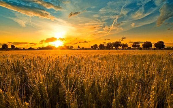گردش مالی 80 هزار میلیارد ریالی در حوزه کشاورزی چهارمحال و بختیاری
