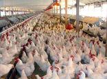 پنج نتیجه مذاکرات اتحادیه سراسری مرغداران مرغ گوشتی با مسئولان بانکی و دولتی + تصویر نامه