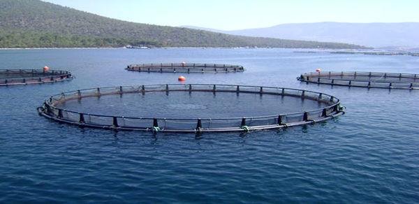 سمینار علمی معیارها و روش های انتخاب مکان های مناسب استقرار قفسهای پرورش آبزیان